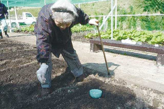 季節ごとに種まきや収穫があり、施設内の「長寿菜園」は一年を通して人気です。